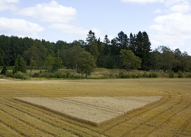 Wheat Field Triangle