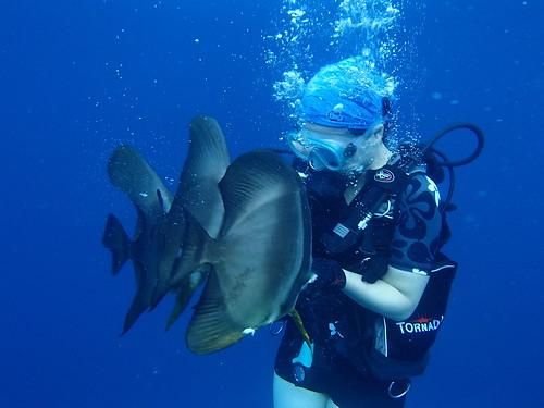 圓眼燕魚 Orbiculate batfish
