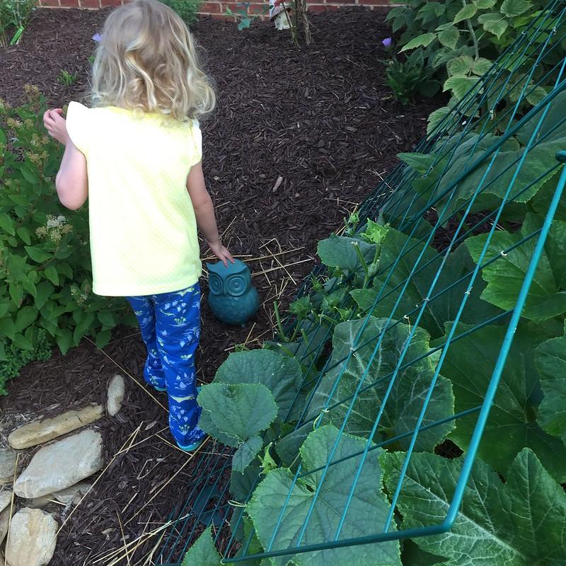 Summer Garden 2015