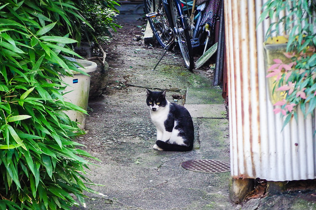 Today's Cat@2015-09-17