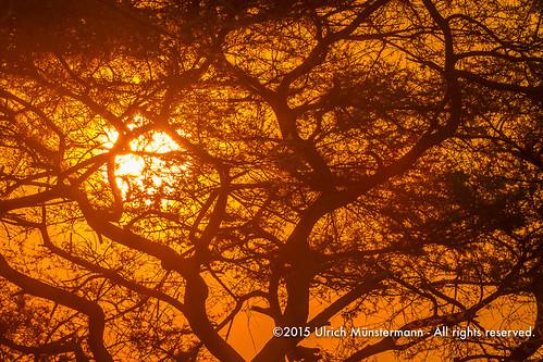 africa travel sunset red sun holiday tree nature vakantie zonsondergang colours sonnenuntergang natur natuur safari afrika za ferien zambia reise farben reizen kleuren zm lowerzambezinationalpark lusakaprovince 150900zambia