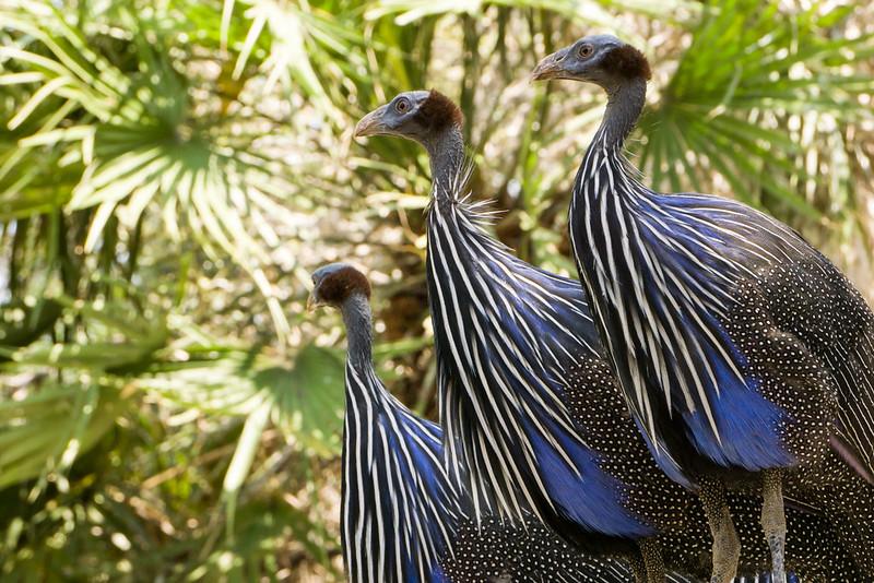 20151018 - 005 - MonteCasino Bird Garden