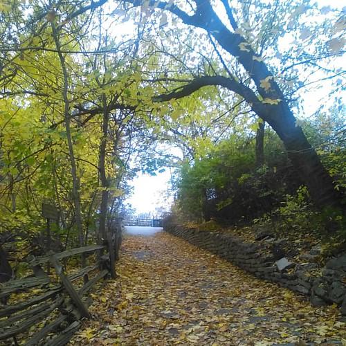 Ascending #toronto #riverdaleparkwest #riverdalepark #autumn