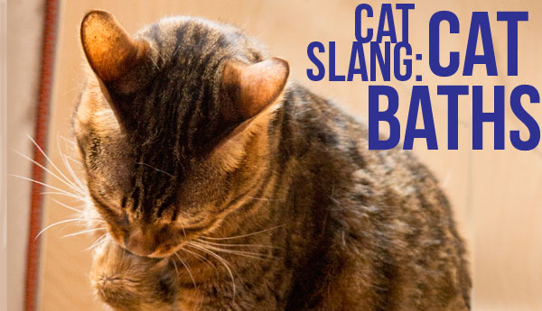 cat-slang-cat-baths