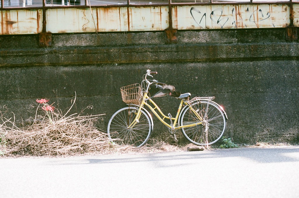 鴿子 腳踏車 大阪 Osaka 2015/09/22 這次我就有拍到剛飛起來的鴿子。  Nikon FM2 Nikon AI Nikkor 50mm f/1.4S AGFA VISTAPlus ISO400 0945-0032 Photo by Toomore