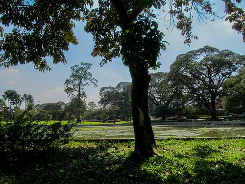 Yangon: le parc Kandawgyi, où nous avons fait notre sieste