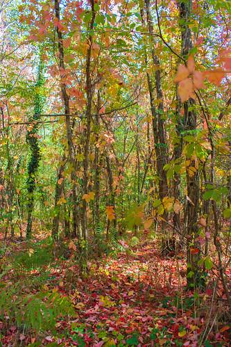 L'automne dans les Landes