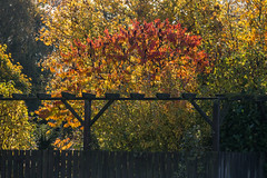 Autumn colors - HFF