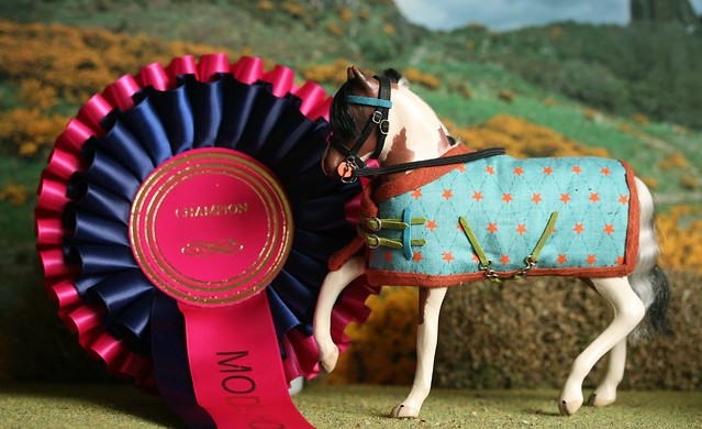 Digby - Champion
