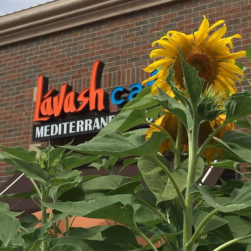 Real sunflowers outside of Lávash Café in Columbus Ohio. The Mediterranean food here is so good that it makes everything else I've ever had taste like fast food. Entrées in the $13-$20 range and sandwiches in the $8 to $10 range.