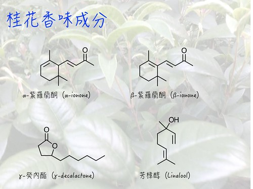 桂花香味成分。圖片來源:王升陽。