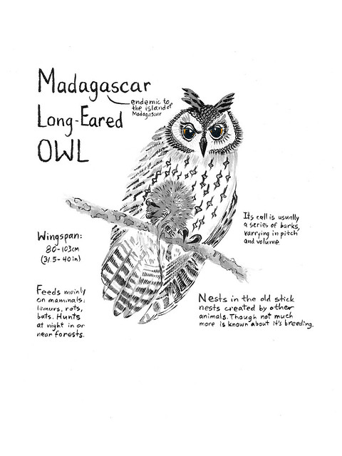 Owls_18_Madagascar
