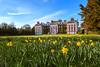 Hursley Daffodil by Liam O'Neill