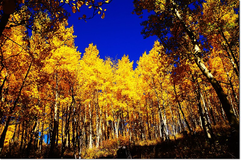 Fall colors at Kenosha Pass, Colorado (4)