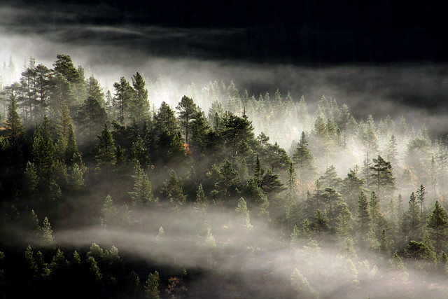 Mist hanging on the trees