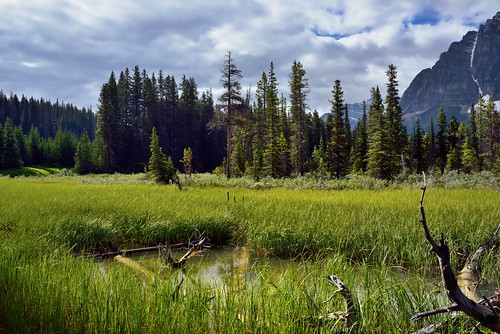 trees canada mountains nature pond meadow overcast alberta meander portfolio day5 continentaldivide banffnationalpark icefieldsparkway canadianrockies lookingsouth highway93 project365 colorefexpro grassymeadow bendinriver waputikmountains mountainsindistance nikond800e mountainsoffindistance capturenx2edited