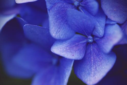 Macro Mondays : Blue