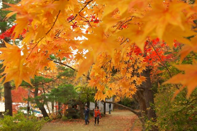 2015紅葉 紅桜公園_07
