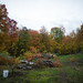 Colorful Fall Leaves on Our Land by goingslowly