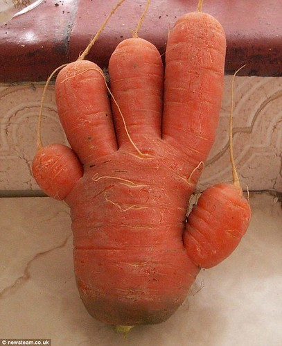 Carrot Hand. Grown by Peter Jackson.