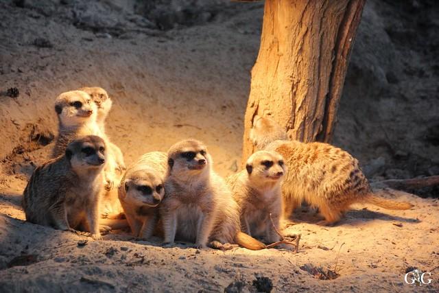 Besuch Zoo Rostock 29.12.201561