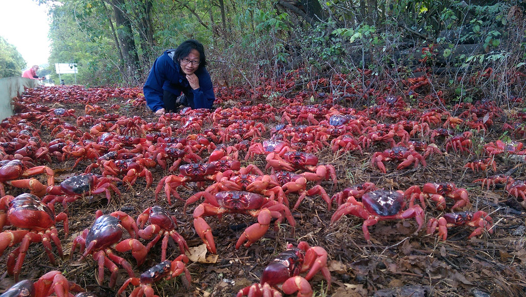 Christmas Island and The Amazing Red Crab Migration – CedAvril