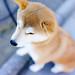 賀正犬2 by neco_onsen