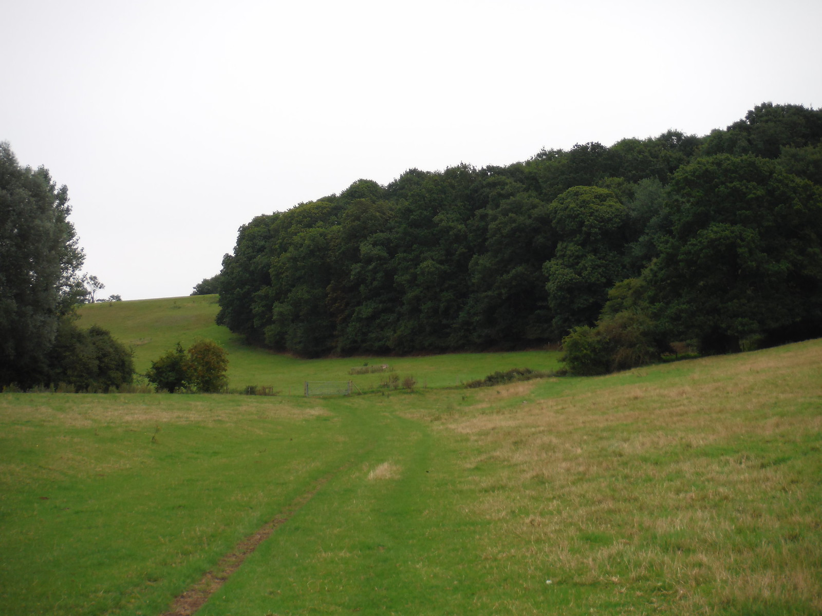 Hogham's Wood, Ash Valley SWC Walk 164 Roydon to Sawbridgeworth via Henry Moore Foundation