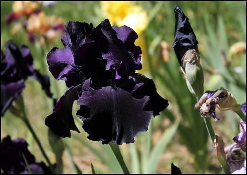 Black Tie Affair (4)