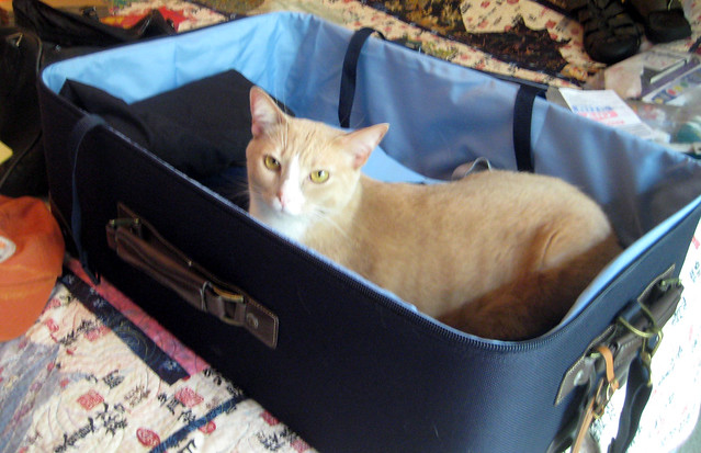 buddy in the suitcase
