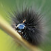 The funky caterpillar by Pog's pix