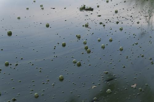 bubbles sāviena