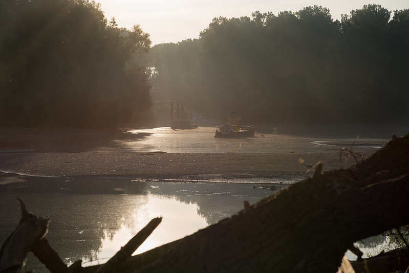 Altrhein im gegenlicht