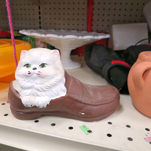 cat in a loafer