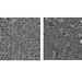 Norton EVO polerbrynen - Struktur