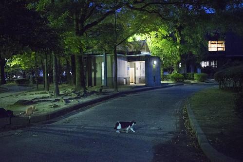 JS J1 08 009 福岡市中央区 須崎公園 / SONY A7M2 × MC W.ROKKOR-HG 35mm F2.8
