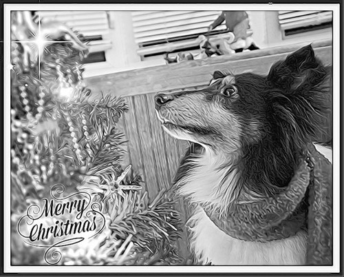 A stenciled Jasper Christmas