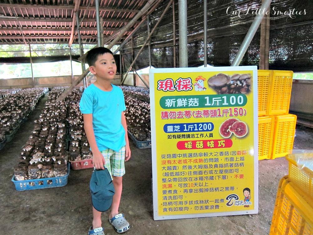 Ah Liang's Mushroom Garden