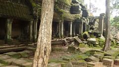 Lara Croft was here. Ta Prohm, Cambodia