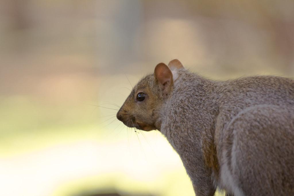 That pondering squirrel!