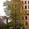 Tweedy leaves and brick, 12/5/16