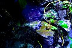 Poison Arrow Frog (HMB!)