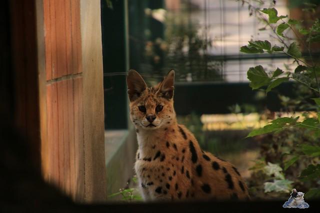 Tierpark Berlin 16.08.2015  075