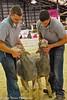Sheep Show