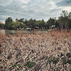 Breath of autumn by veryoxygen