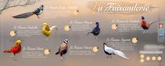 Panneau - La Faisanderie - Domaine Des Oiseaux - Sep2015 V1c