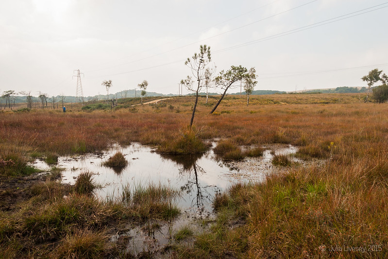 Reflections on the heath