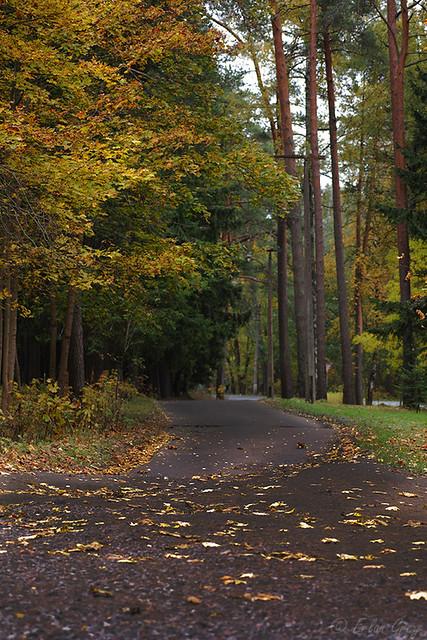 autumn_roads_17