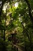 German Woods - Curitiba by RenataMacedo