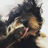Lobisomem selvagem #dog #viralata #cachorro #serranegra #saopaulo